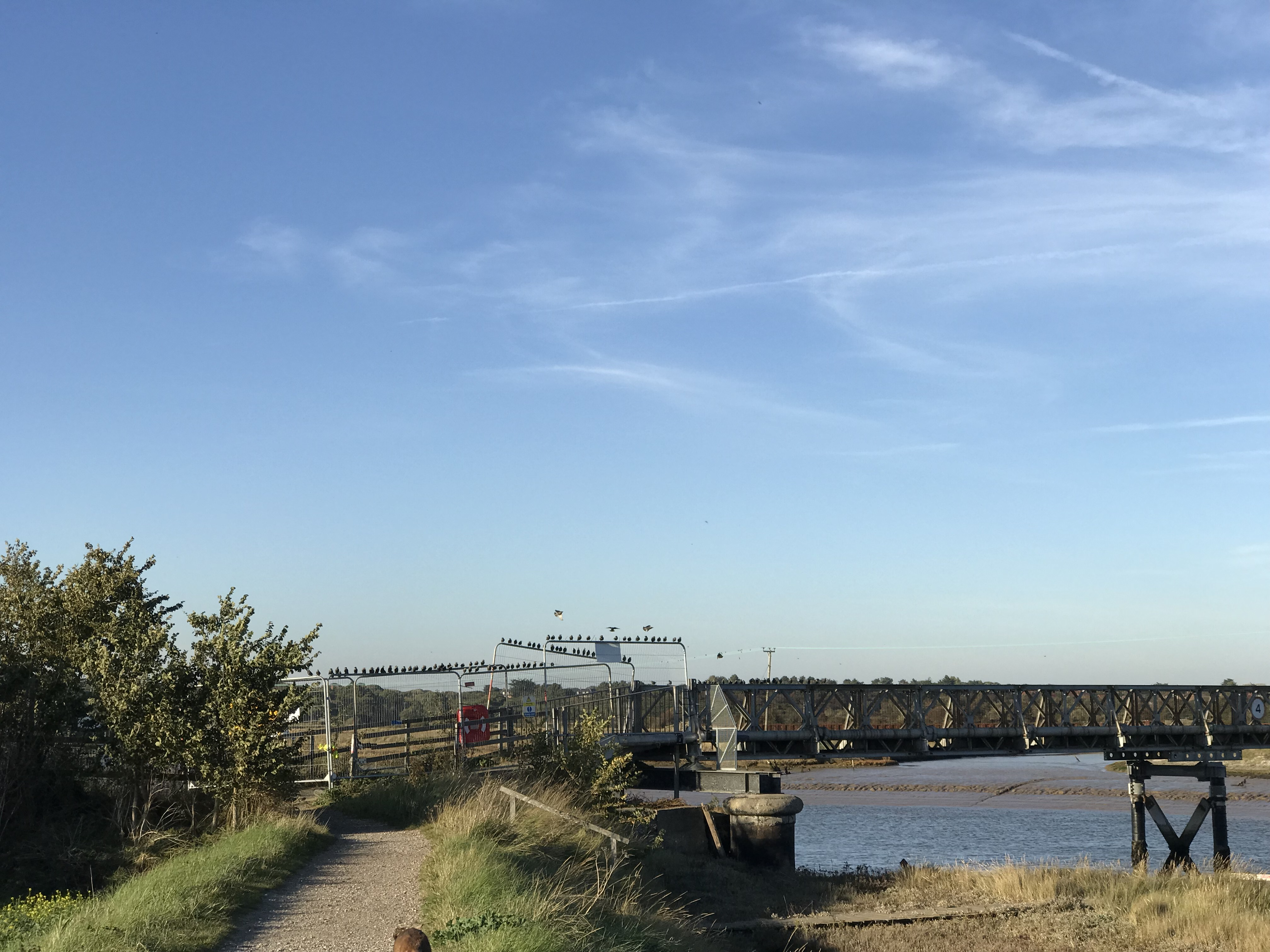 29th October - Bailey Bridge Update