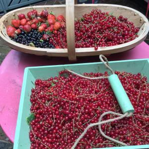 Soft fruit: strawberries, black currants, red currants