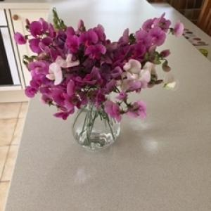 Category 33: Sweet Peas