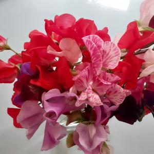 MORE SWEET PEAS