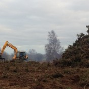 Mechanical gorse clearing - January